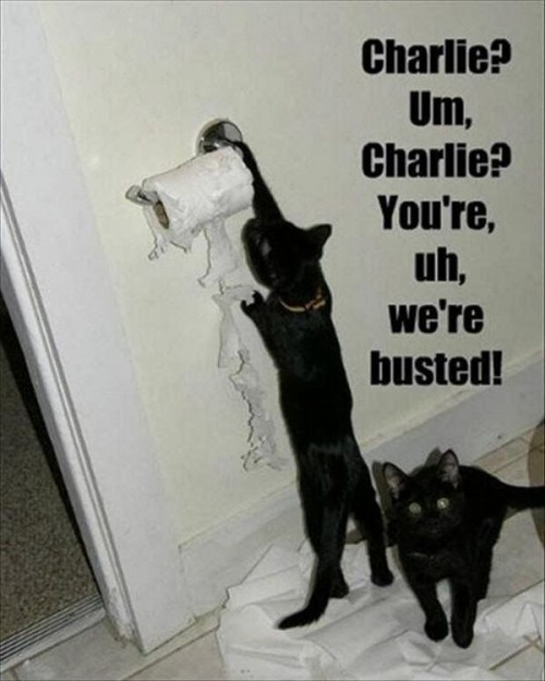 best-funny-quotes-012-funny-captions-017-cats-charlie-were-busted-jpg-600x750-pixels.jpg