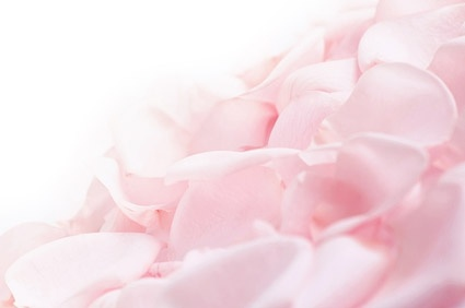 soft_pink_rose_petals_stock_photo_166716.jpg