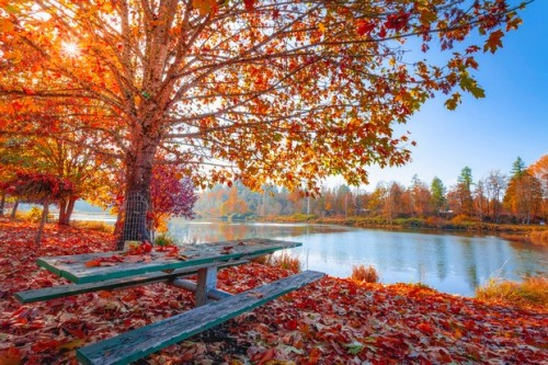 autumn-leaves-beautiful-daylight-1741696_big.jpg