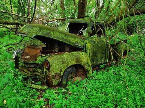 Car-in-the-Forest.jpg